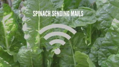 Photo of Spinach Plant Able to Send an Email